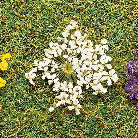Faller 171830 - Nat Blossoms White 100/