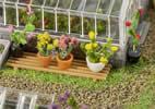 6 Pot plants