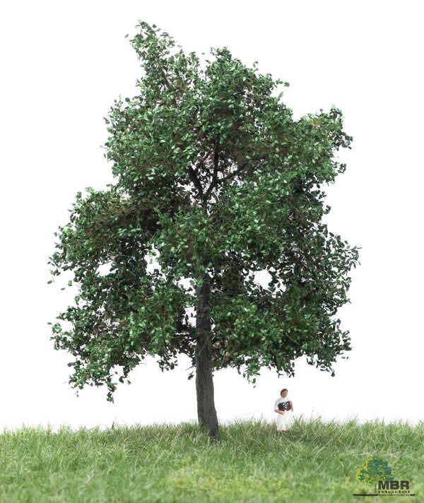 MBR 51-2203 - Summer Oak Tree