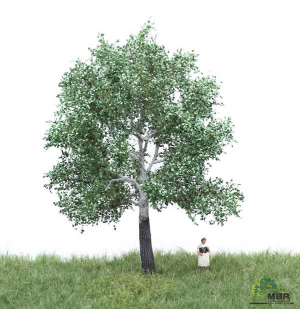 MBR 51-2205 - Summer White Poplar Tree