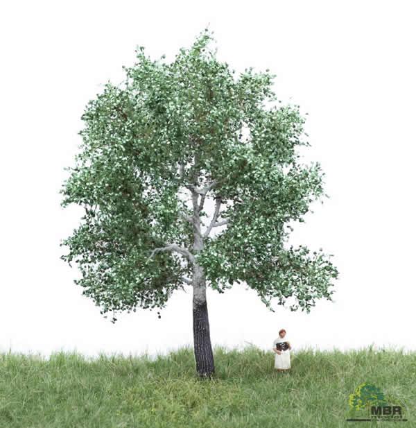 MBR 51-2205 - Summer White Poplar Tree
