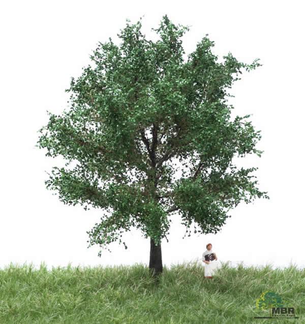 MBR 51-2206 - Summer Canadian Poplar Tree