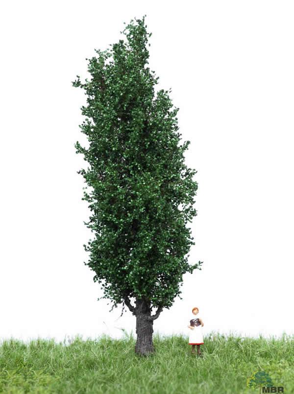 MBR 51-2207 - Summer Italian Poplar Tree
