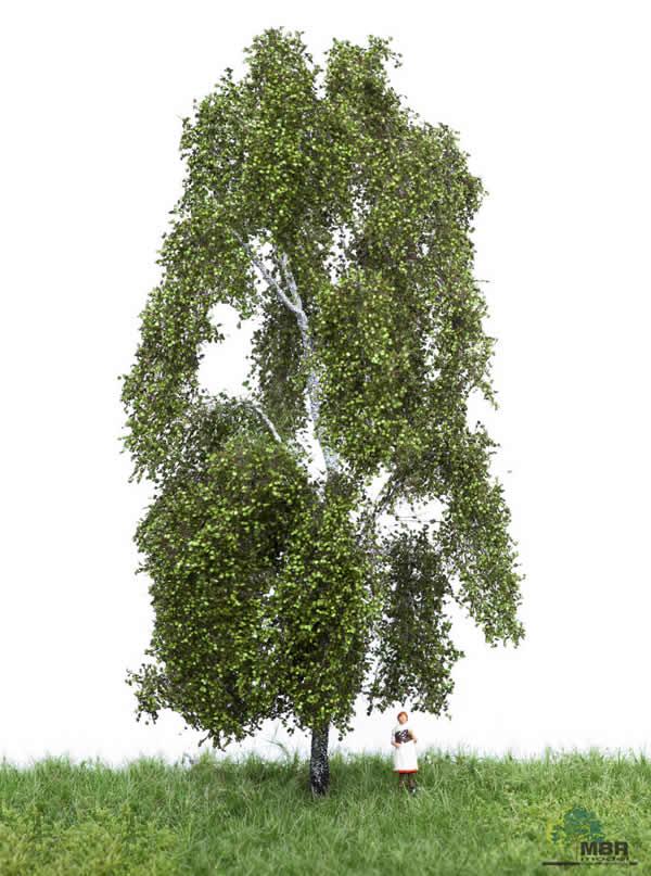 MBR 51-2301 - Summer Birch Tree