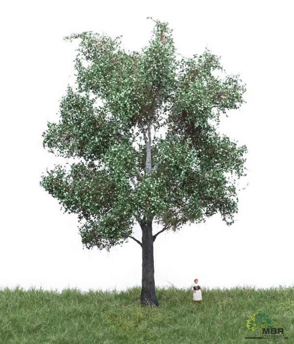 MBR 51-2305 - Summer White Poplar Tree