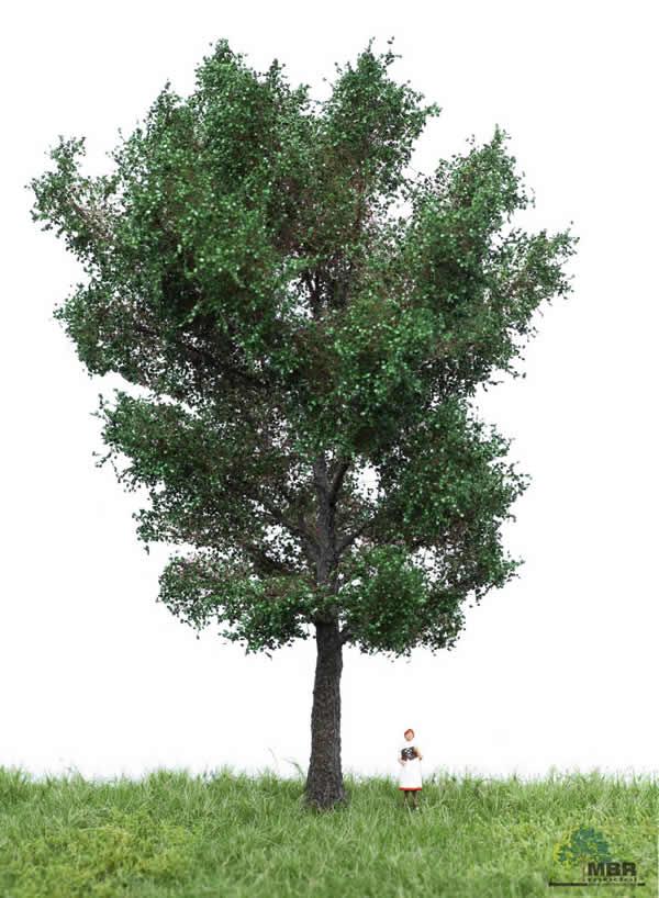 MBR 51-2306 - Summer Canadian Poplar Tree