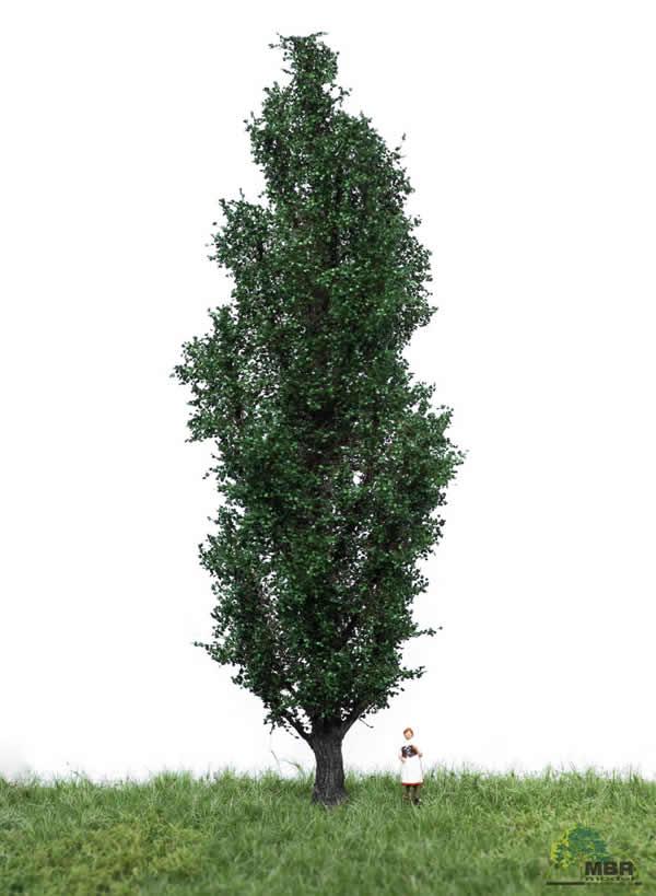 MBR 51-2307 - Summer Italian Poplar Tree