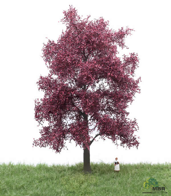 MBR 51-2314 - Red Beech Tree