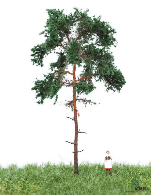 MBR 51-4204 - Summer Pine Tree