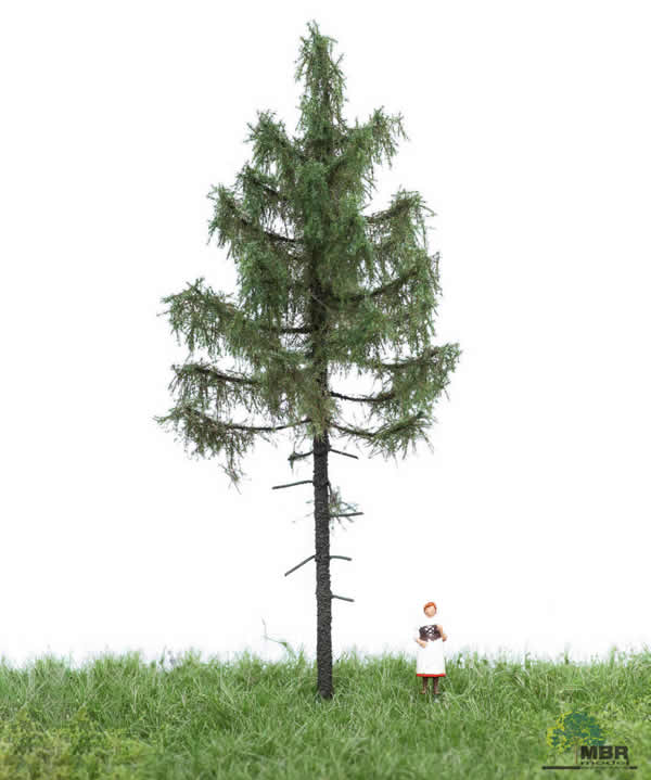 MBR 51-4205 - Summer Forest Spruce Tree
