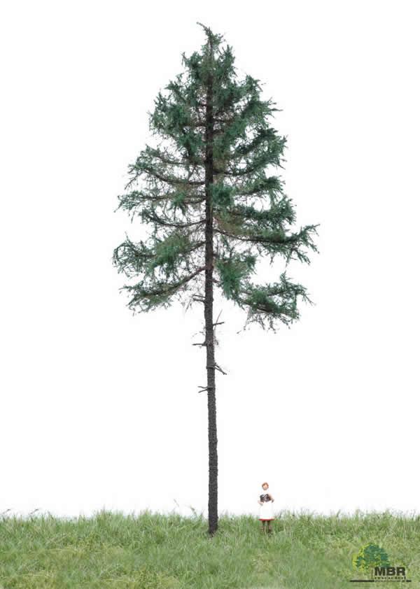 MBR 51-4301 - Summer Fir Tree