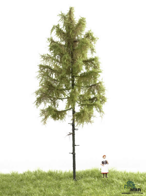 MBR 51-4302 - Summer Forest Larch Tree
