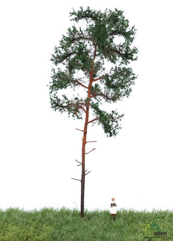 MBR 51-4304 - Summer Pine Tree