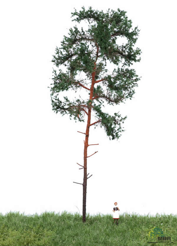 MBR 51-4304 - Summer Pine Tree