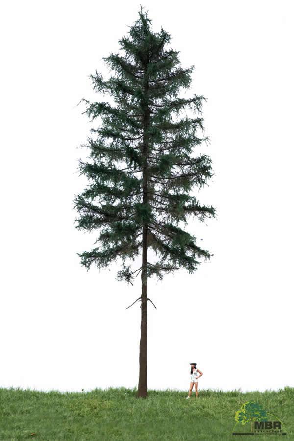 MBR 51-4401 - Summer Fir Tree