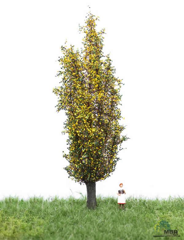MBR 52-2207 - Autumn Italiam Poplar Tree