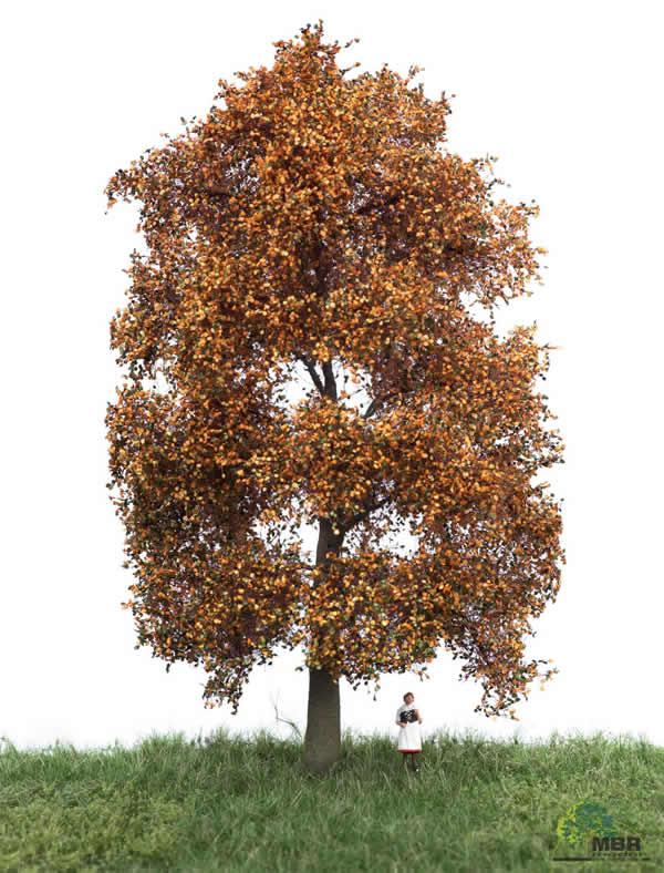 MBR 52-2302 - Autumn Beech Tree