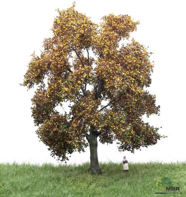 MBR 52-2303 - Autumn Oak Tree