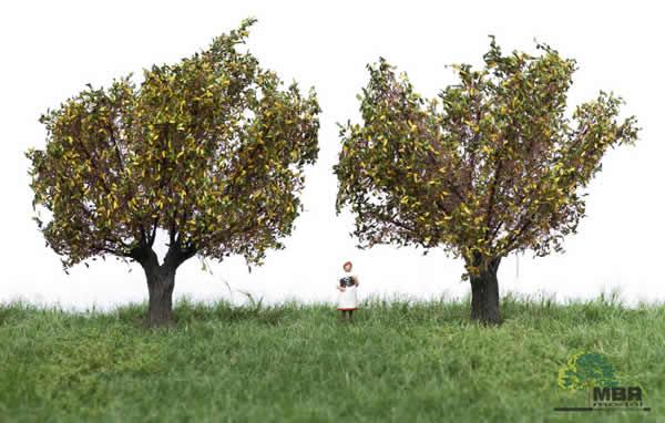 MBR 52-2308 - Authum Willow Tree