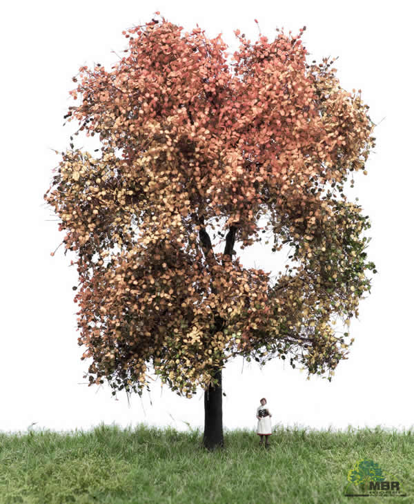 MBR 52-2312 - Authum Maple Tree