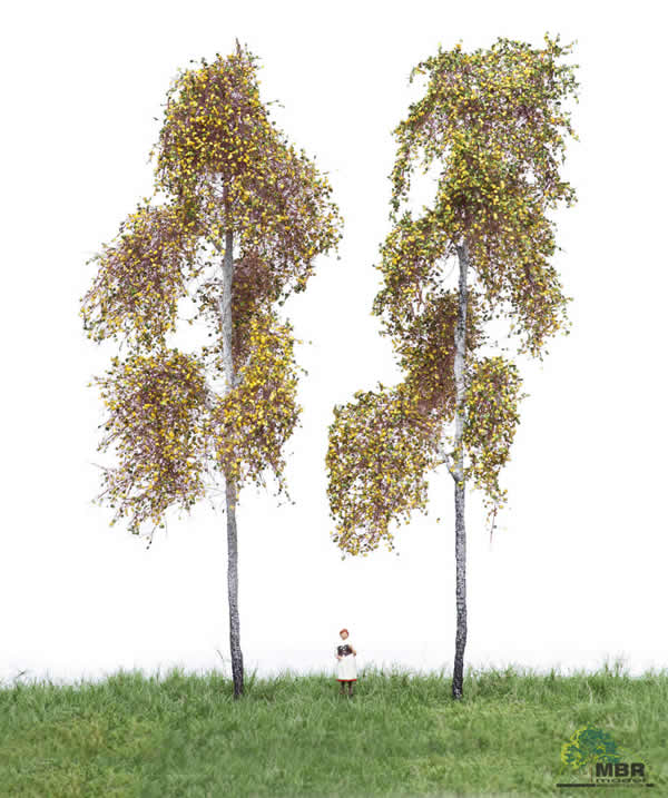 MBR 52-2313 - Authum Forest Birch Tree Pack of 2
