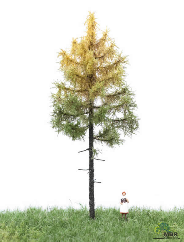 MBR 52-4202 - Authum Forest Larch Tree