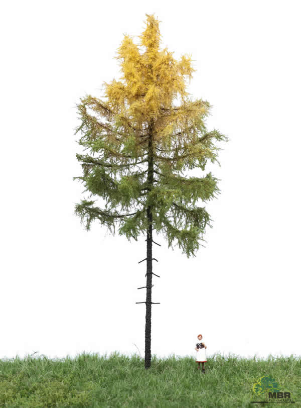 MBR 52-4302 - Authum Forest Larch Tree