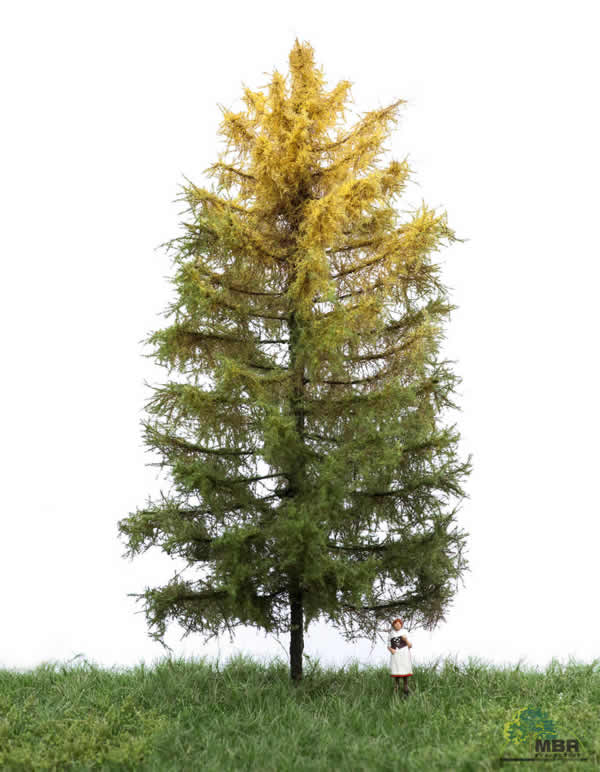 MBR 52-4303 - Authum Larch Tree