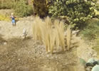 Reed 25 mm Natural