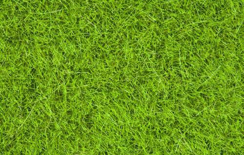 Noch 07093 - Wild Grass, bright green, 6 mm
