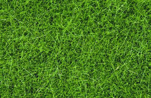Noch 07094 - Wild Grass, dark green, 6 mm