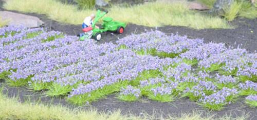 Noch 07136 - Lavender