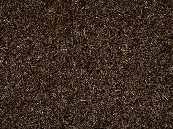 Noch 08340 - Reed Grass