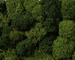 Noch 08610 - Lichen, green mix, assorted