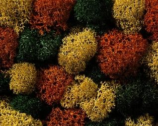 Noch 08620 - Lichen, autumn mix, assorted