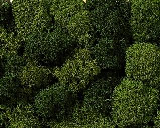 Noch 08621 - Lichen, green mix, assorted