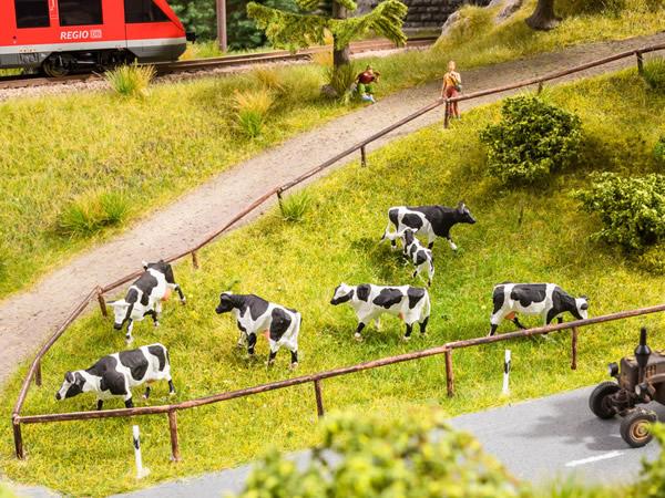 Noch 12851 - Cow Pasture