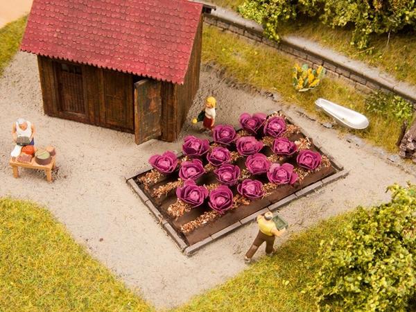 Noch 13218 - Red Cabbage