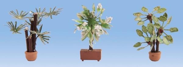 Noch 14023 - Mediterranean Plants
