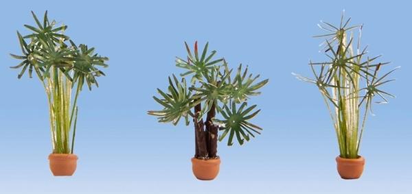 Noch 14024 - Palms