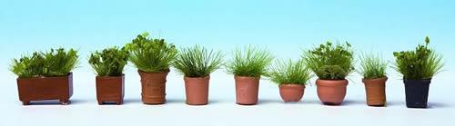 Noch 14032 - Foliage Plants in Pots