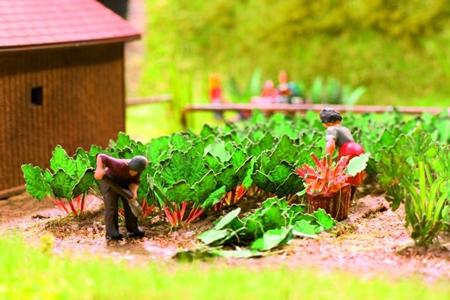 Noch 14602 - Rhubarb
