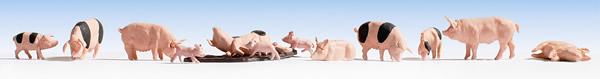 Noch 15712 - Pigs