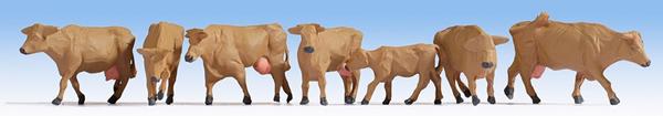 Noch 15727 - Cows, brown