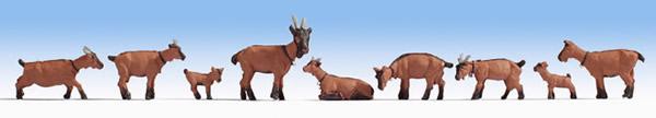 Noch 15752 - Goats