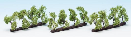 Noch 21530 - Plantation Trees
