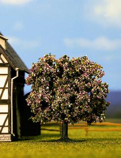 Noch 21570 - Fruit Tree, flowering