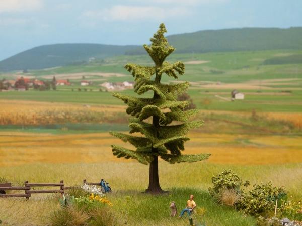 Noch 21829 - Spruce Tree