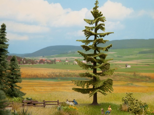 Noch 21834 - Spruce Tree