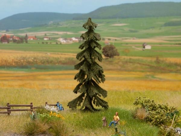 Noch 21919 - Spruce Tree